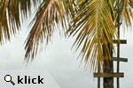 klick!