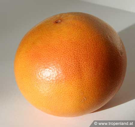 Grapefruit-Citrusparadisi
