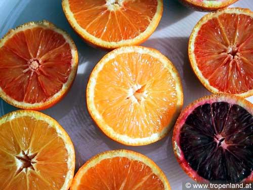 Orange-Citrussinensis